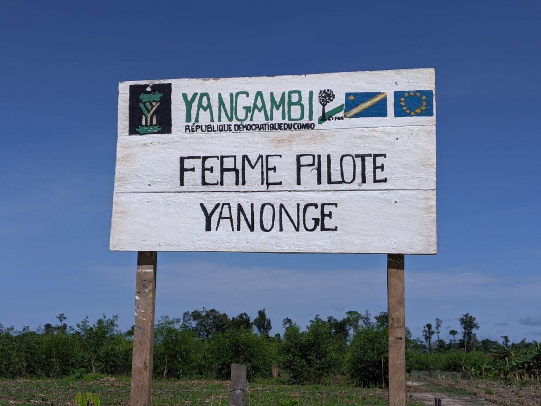 Environnement : grâce au financement de l'union européenne, des programmes importants s'exécutent à Yangambi
