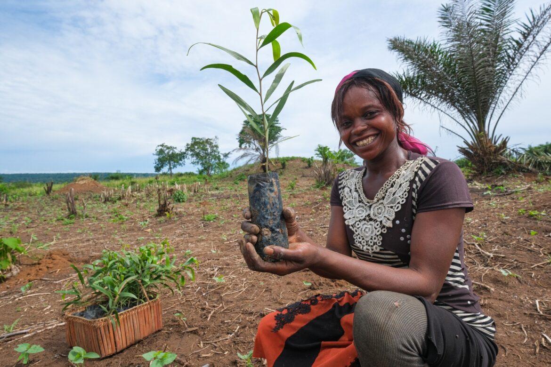 Environnement : un million d'arbres plantés à Yangambi; un nouveau jalon dans la restauration forestière en RDC