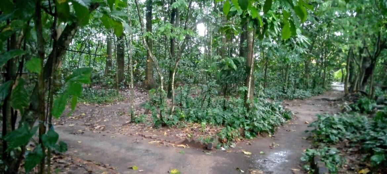 Kisangani : le jardin botanique de la faculté des sciences, 46 ans d'existence